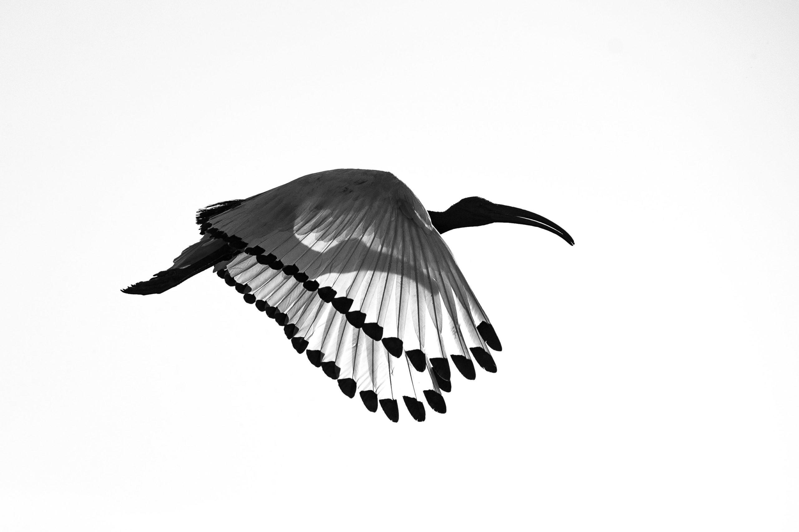 Ibis Philippe Cabanel Invité