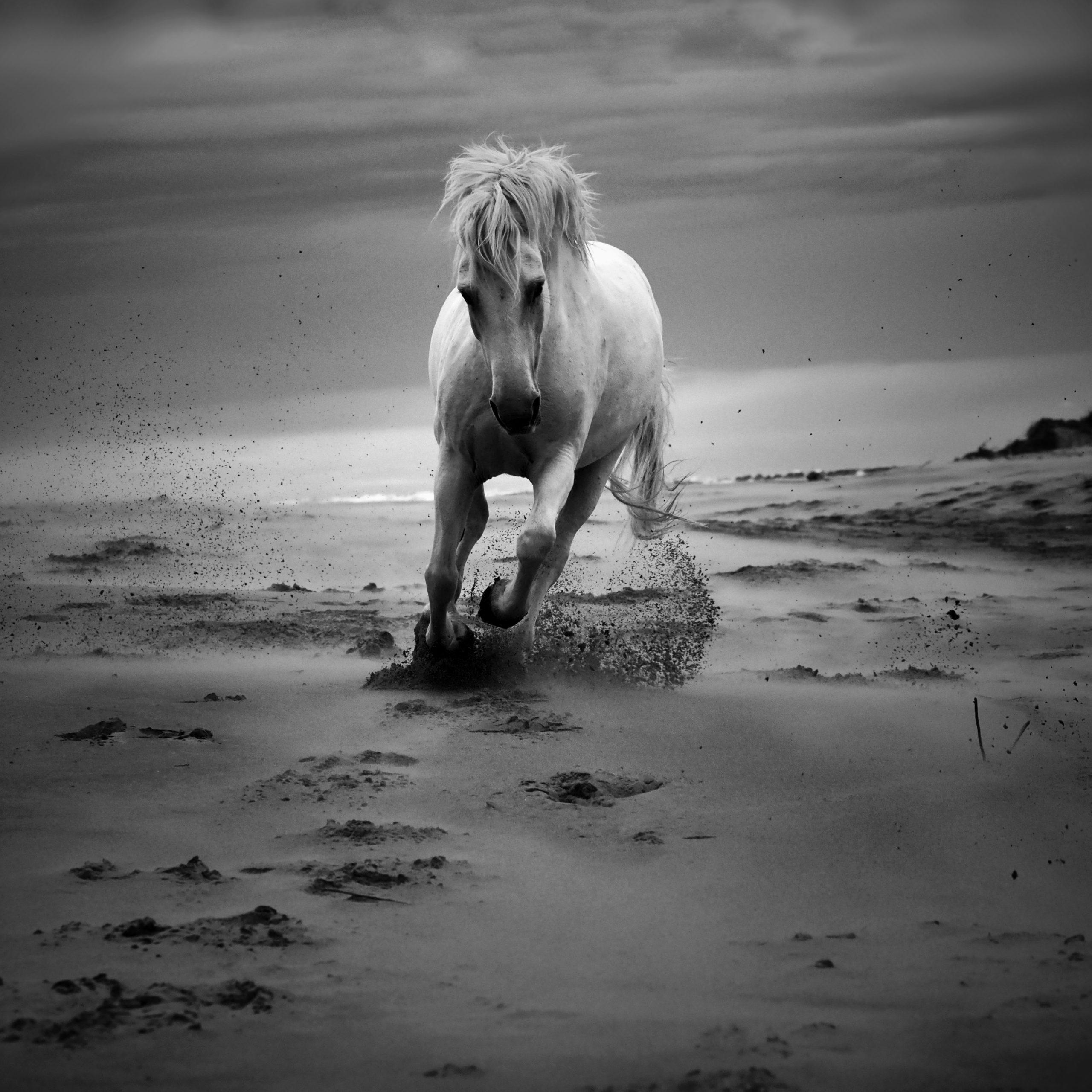 BARRERA Laurent - Horses Kami