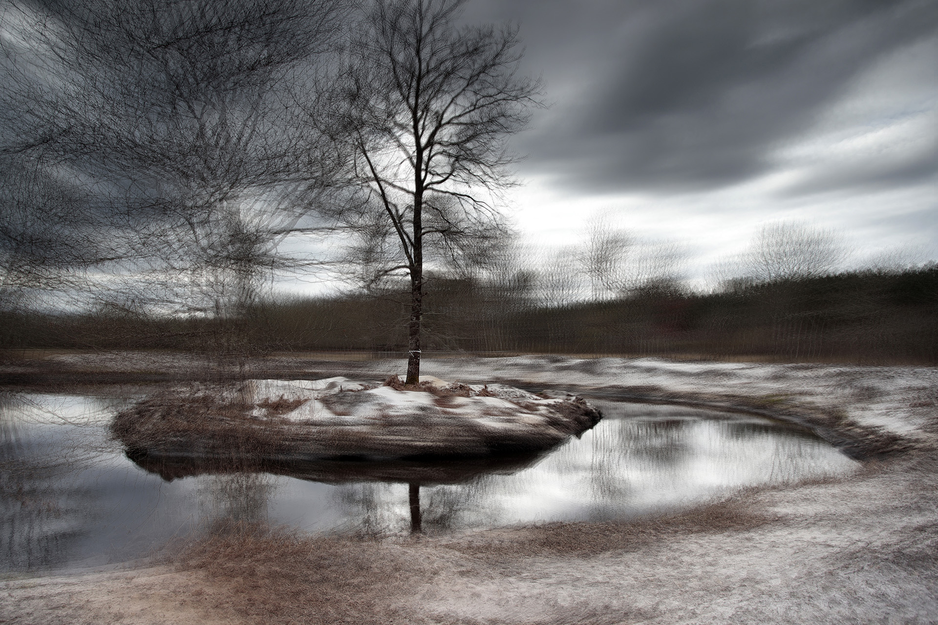 GRAILLOT Hervé - Juste un arbre